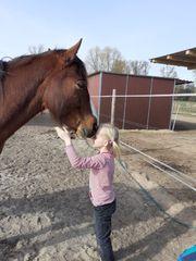 Liebenswertes Pferd für Bodenarbeit und