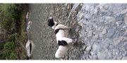 Hundefreundlicher Vermieter gesucht