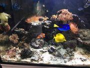 400l Meerwasser Aquarium komplett