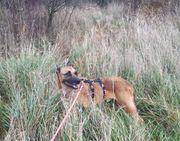 Leon - ein toller Hund aus