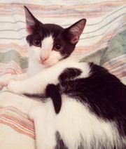 Kätzchen Bibiana möchte Deine Welt