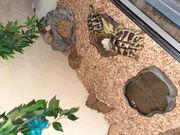 Schildkröten mit Terrarium und Zubehör
