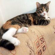 Hübsche Katzenmädchen Tilly freut sich