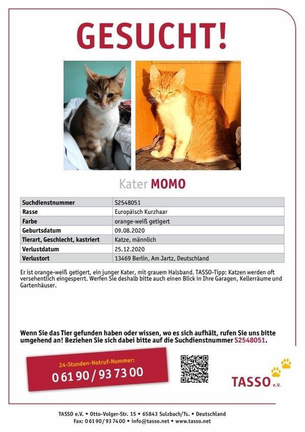 Katze Kater MOMO entlaufen verschwunden