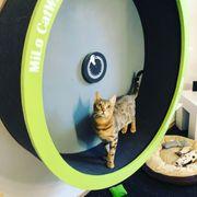 Katzenlaufrad Catwheels by MiLo
