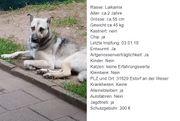 Klara - Laikamix