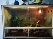 Kornnatter Terrarium extra zu Verkaufen