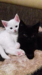 3 Kätzchen suchen ein neues
