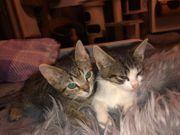 2 Baby Kater Kitten Adrian