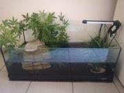 Moschusschildkröte inkl Aquarium Komplettset