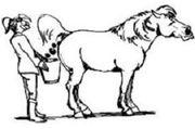 Pferdemist - Pferdeäpfel - Anlieferung - ohne Stroh -