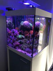 Meerwasser Aquarium Eheim mit Inhalt