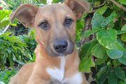ZOE-bildhübsches Hundemädchen aus dem Tierschutz