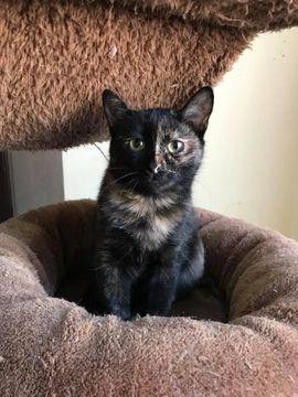 Katzen - Nici - Katze geb 2017