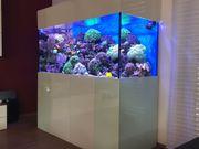 Meerwasseraquarium 160x70x70 Komplett Meerwasser Aquarium