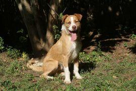 Hunde - Der aktive Nougat sucht seine