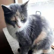 Katzenmädchen Sklya - Ruhig und freundlich