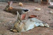 Suche Haus- und Tierbetreuer in