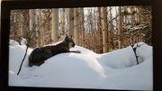 TV Samsung - Full-HD fast wie