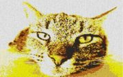 Vorlage für Ministeck Bored Kitten