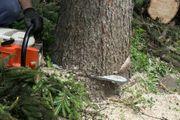 Baum Pflege Schnitt und Fällung