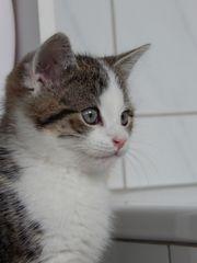 Kitten Kater mit Zubehör