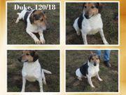 Lieber Duke sucht liebe Familie