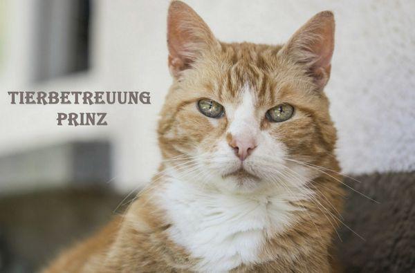 Katzenbetreuung mobil bei dir Daheim