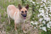 SINDY - frischgebackene Hundemama - menschenbezogen und