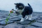Katzensitter Tierbetreuung Katzenbetreuung Katzensitting vor