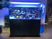 Fast neues RedSea Reefer 625