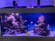 Meeresaquarium komplett