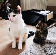Kicki und Kira suchen ein