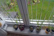 Sumpf-Pflanze Zimmerpflanze Luftbefeuchter