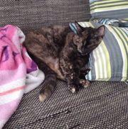 hübsche Katze Kaira sucht Zuhause -