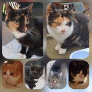 Wunderschöne Katzen und Kater in