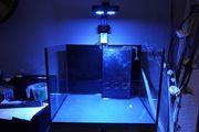 Eheim Proxima 175 Reef Meerwasser