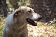 Familienhund sucht zu Hause