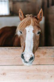 Reitbeteiligung gesucht Mann sucht Pferd