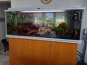 500 Liter- Aquarium mit Fische