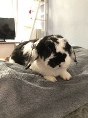 Fritz sucht liebevolles neues Zuhause