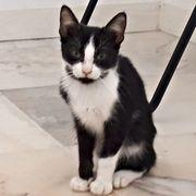 Yadira - liebes Kittenmädchen sucht ein