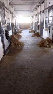 Pferdebox im Rentnerstall des Buchenhofs
