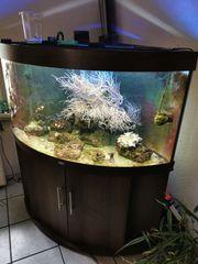 350Ltr Meerwasser Eckaquarium