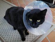 verschmustes Notfellchen Katze 12 Jahre