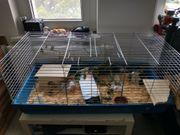 heute 25 Käfig für Meerschweinchen