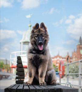 Tierbetreuung - Private Hundebetreung