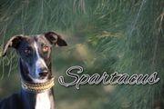 Schenken Sie Spartacus ein außergewöhnliches