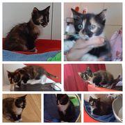 Baby Katze Ronja 8 Wochen