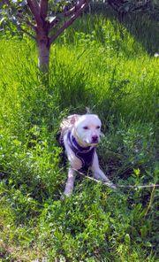 Junghund LLOYD